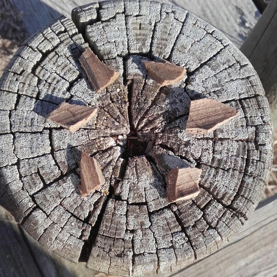 Photo d'un tronc d'arbre